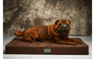Materac dla dużego psa -...